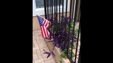 Fight over a flag_5418941