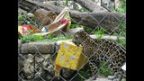 Gallery: Khan, the baby jaguar turns 1 - (3/9)