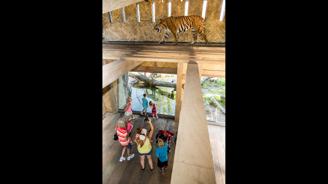 Jacksonville Zoo receives award for Land of the Tiger