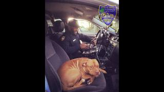 New JSO officer receives unexpected four-legged welcome