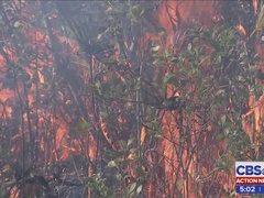 Winds helped crews with prescribed burn in Osceola National Forest