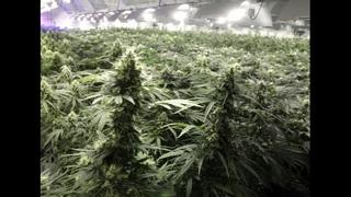 Canadian cannabis company pays $40 million for Florida pot grower