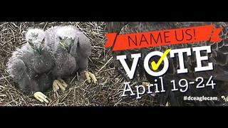 LINK: Name eaglets on Friends of the National Arboretum Facebook