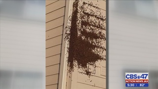 Hundreds of bees swarm Northside apartment complex