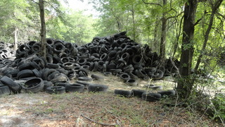 Thousands of illegally discarded tires found behind Lake City auto parts shop
