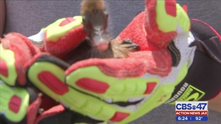 Baby chicks rescued from drain in Middleburg