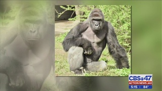 Jacksonville zoo talks about safety measures in wake of child