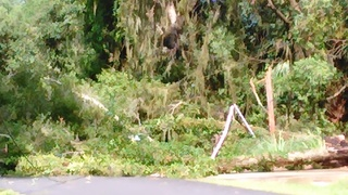 Storm damage reported in Amelia Island