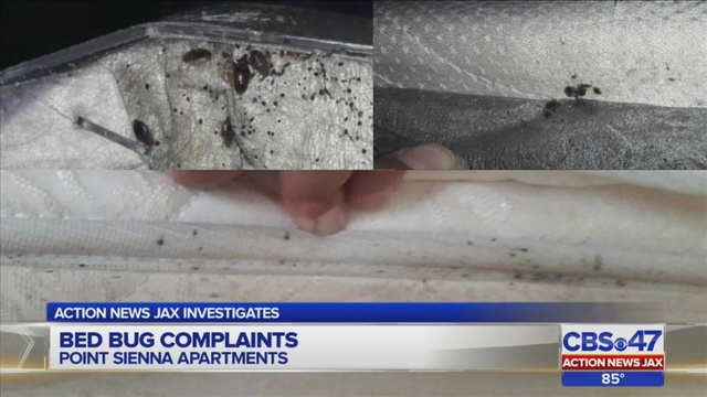 Tenant at Jacksonville apartment complex finds bed bugs in his
