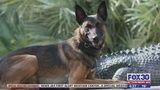 Alachua deputy on leave after K9 dies in hot car