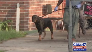 Jacksonville dogs involved in deadly act to be declared 'dangerous