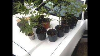 Gainesville Police find 16 pots of marijuana near elementary school