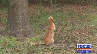 Jacksonville woman says dogs attacked, killed her 3 cats