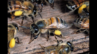 Aerial spraying in St. Johns County and its effects on bee population