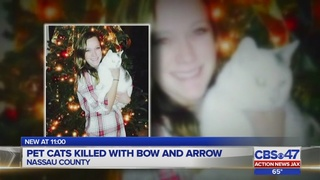 Report: Family cat killed with a bow and arrow in Callahan