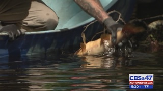 Residents concerned over fish kill in Green Cove Springs