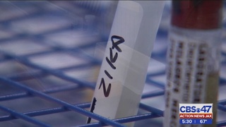 Local mosquito experts closely monitoring GMO test to combat Zika
