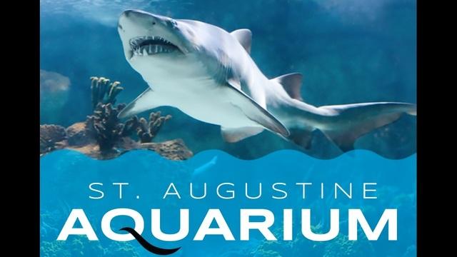 st augustine aquarium snorkel adventure set to open on