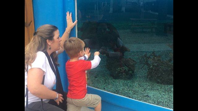 St Augustine Aquarium And Snorkel Adventure Opens Wjax Tv