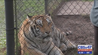 Catty Shack Ranch in Jacksonville wants to give circus animals forever home