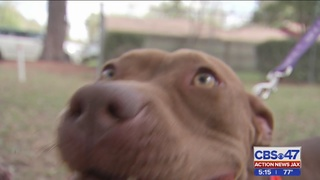 Witness: Dog saved after being thrown out with garbage in Columbia County