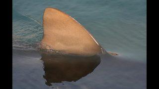 Man, 58, bitten by shark near Daytona Beach