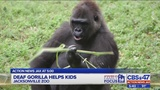 Deaf gorilla at Jacksonville Zoo helps hearing impaired kids
