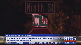 Four year old recovering after dog attack