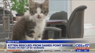 Kitten rescued from top of Dames Point Bridge in Jacksonville