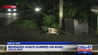 Jacksonville neighbors furious after dead goats left on sidewalk