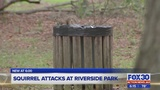 Squirrel attacks at Riverside park