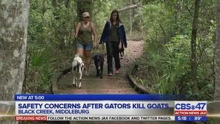 Goats living on Black Creek believed killed by gators