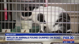 Influx in animals found dumped on road