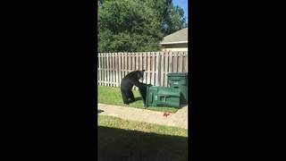 Video: Bear spotted in Jacksonville