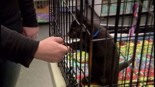Jacksonville Humane Society offers free adoptions this weekend