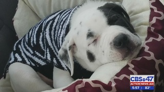 Jacksonville woman says her puppy was shot over shoes
