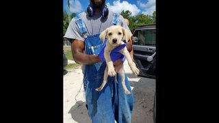 Puppies found in Palatka storm drain need foster homes