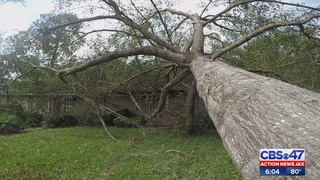 Tree crushes local man