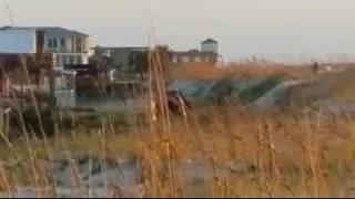 Raw Video: Alleged dune destruction in St. Augustine Beach