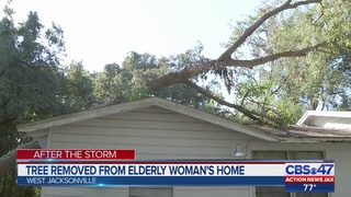 Tree removed from elderly Jacksonville woman