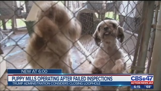 Puppy mills operating after failed inspections