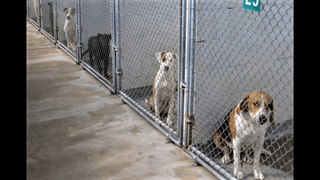 Nassau County Animal Services looking for foster homes for animals during the holidays