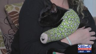 Jacksonville family says pet may lose leg after being shot