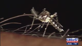 Experts warn of mosquitoes showing up near salt marshes