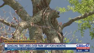 Dangling tree limbs over park left for 6 months