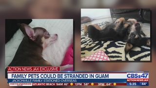 Family Pets Could Be Stranded in Guam