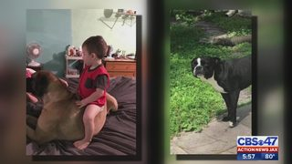 Putnam County father determined to find out who shot his dogs