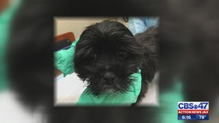 Jacksonville pet stores under fire after reports of dead, sick puppies