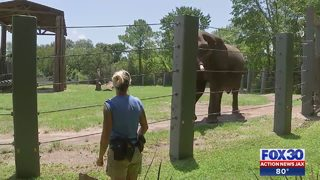 Elephant Safe After Escape from Enclosure