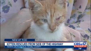 Family saves kitten on interstate